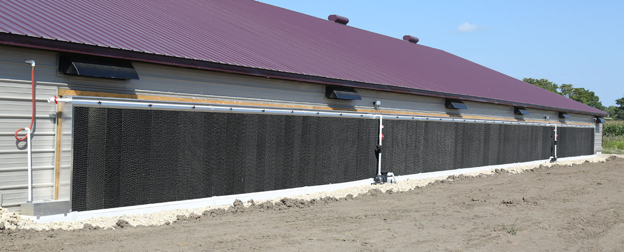 Caseta paredes humedas completa